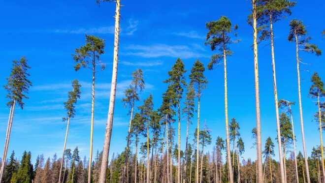 ЖК Звенигородский лес